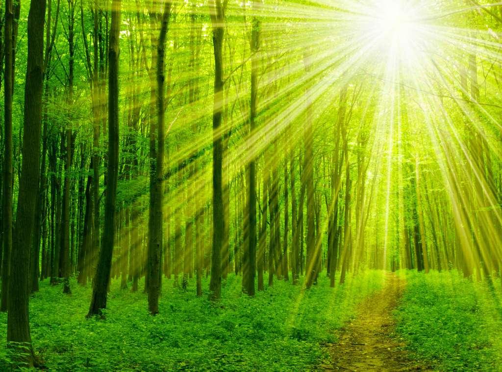 las-światło-słoneczne.jpg