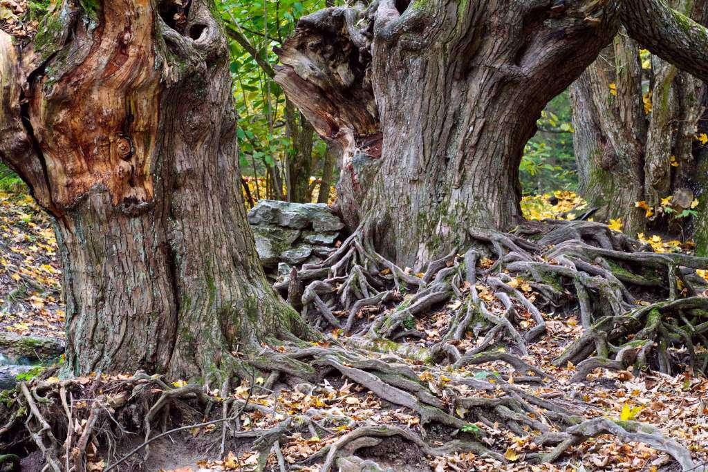 świadomość-drzew.jpg
