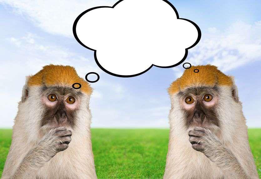 efekt-setnej-małpy.jpg