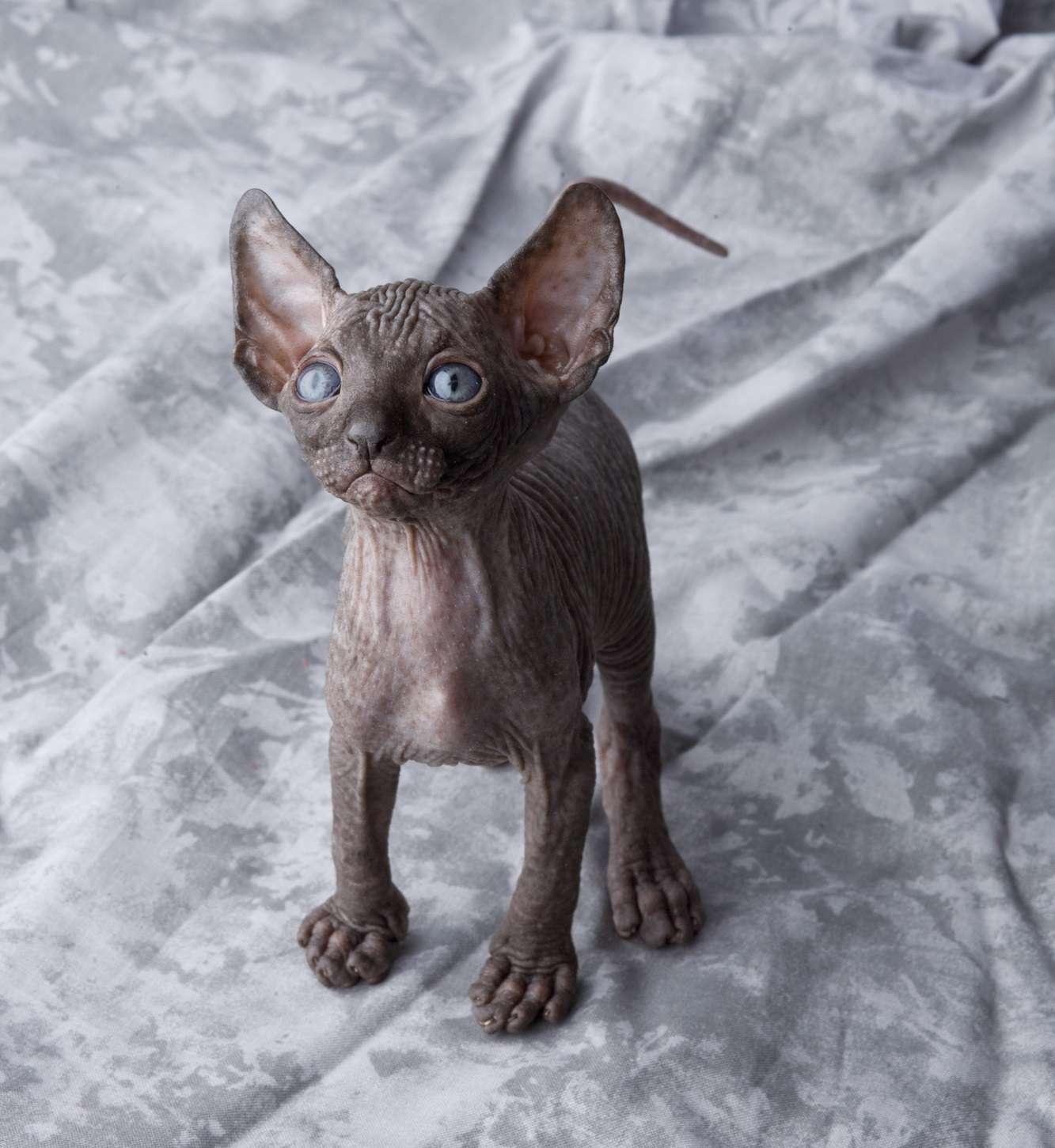 Koty W Kulturze Egipskiej Czyli Boskie Stworzenia Egipcjan