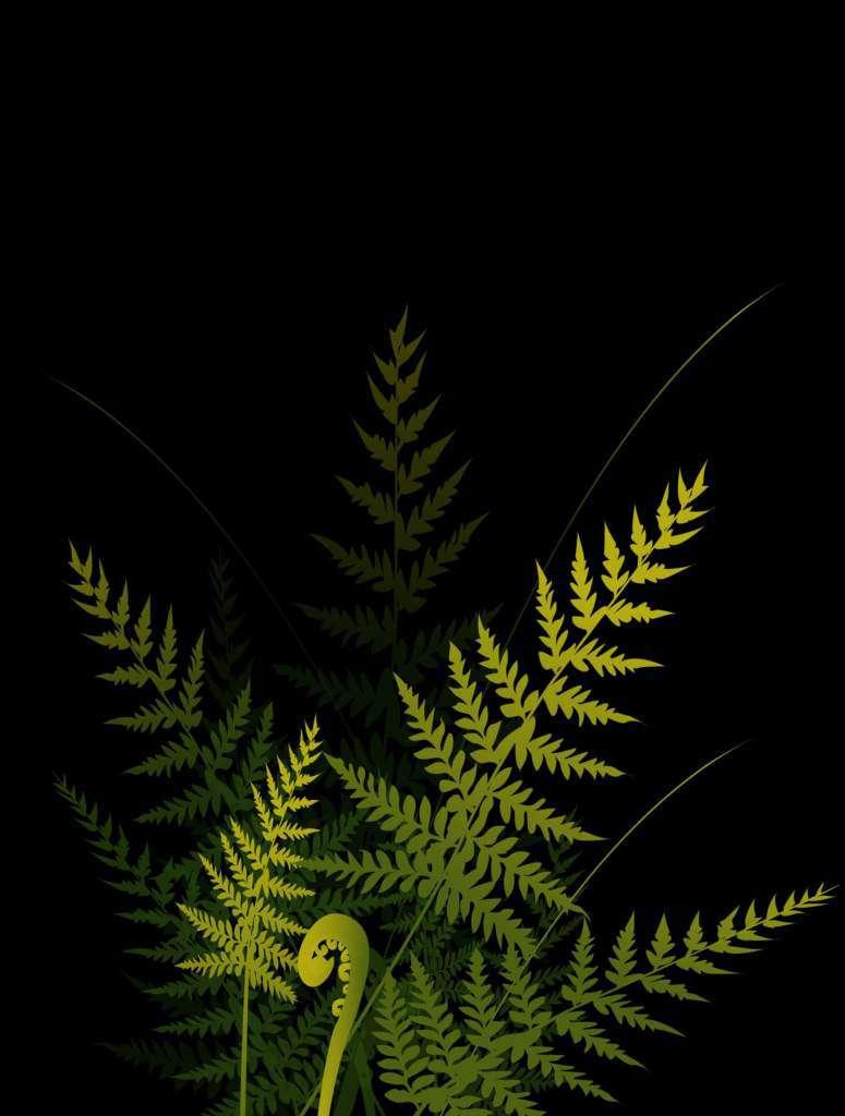 noc-kupały-kwiat-paproci.jpg