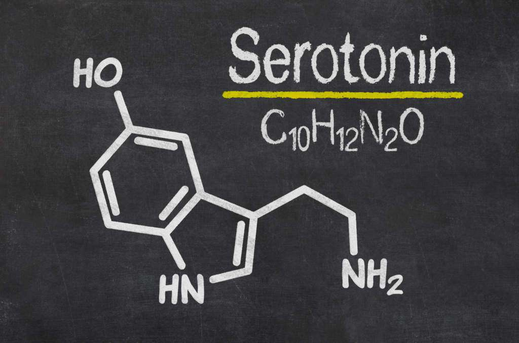 szyszynka-serotonina.jpg