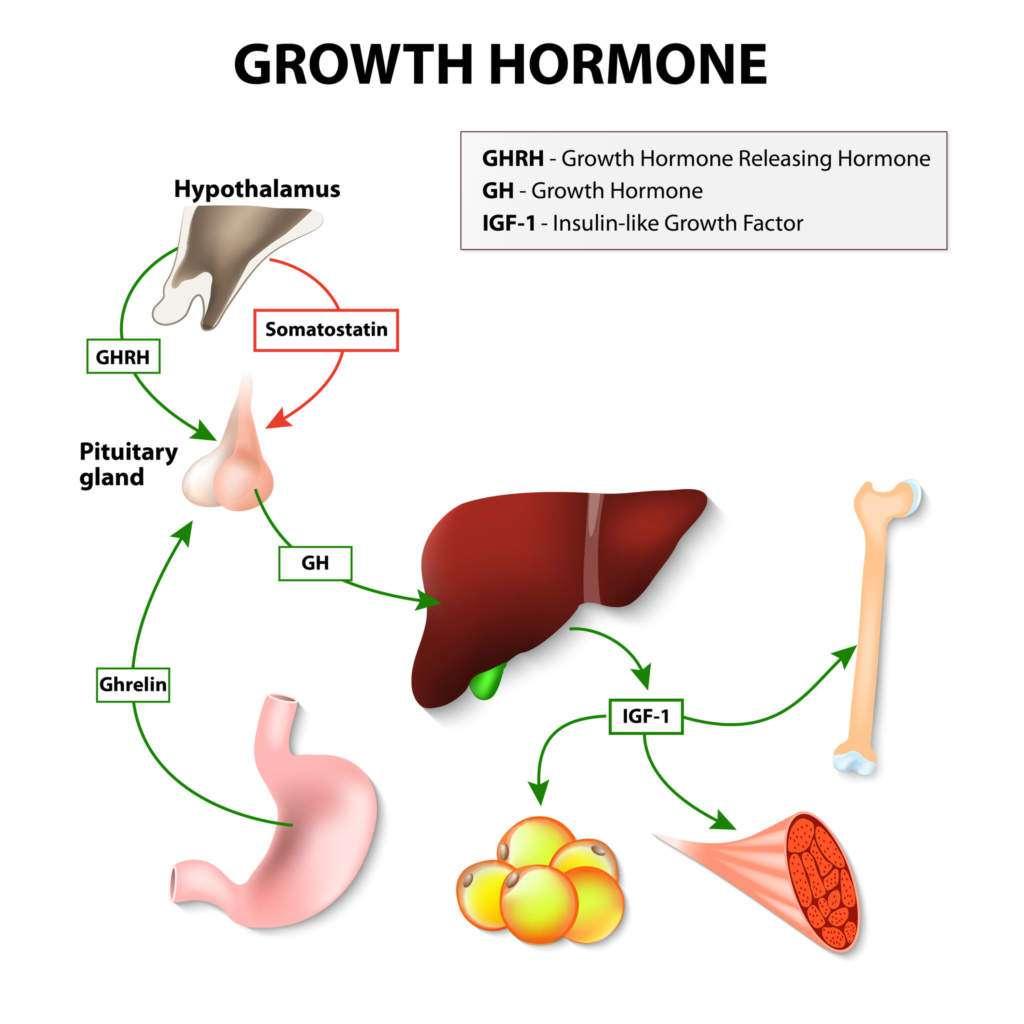 hormon-wzrostu.jpg