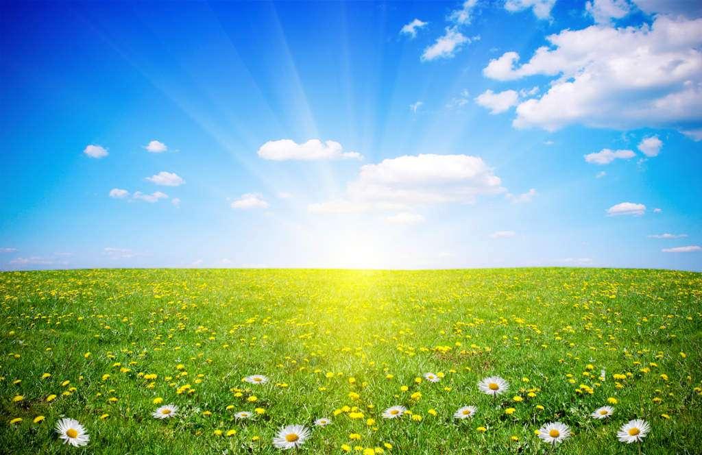 łaka-kwiaty-słońce-relaks.jpg