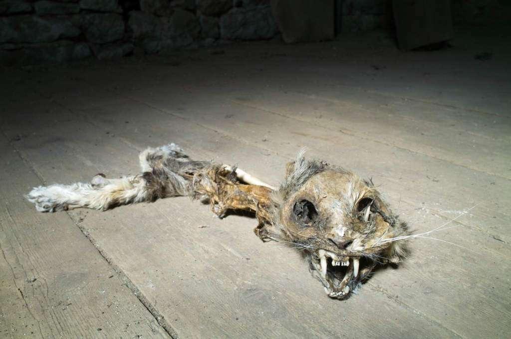 kuchenka-mikrofalowa-martwy-kot.jpg