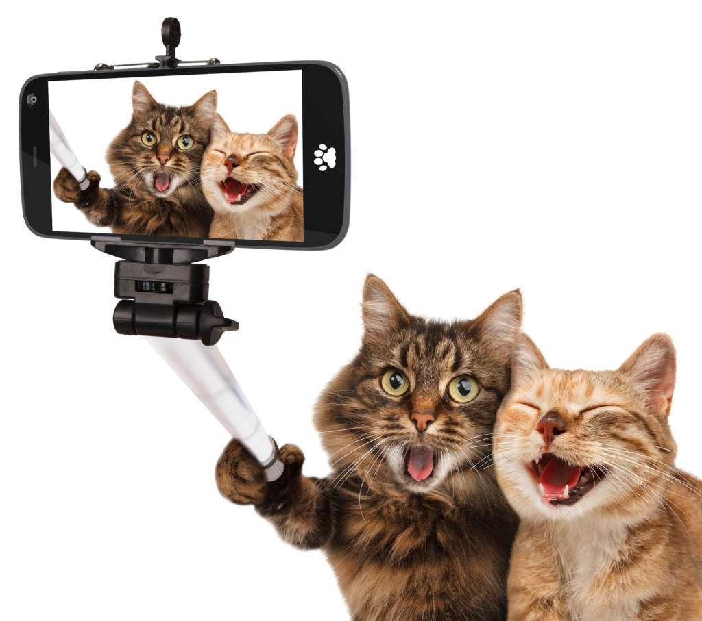 ego-selfie.jpg