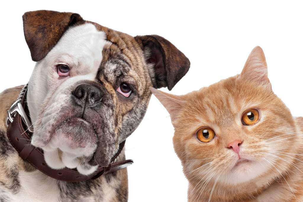 pasożyty-psy-koty-zwierzęta.jpg