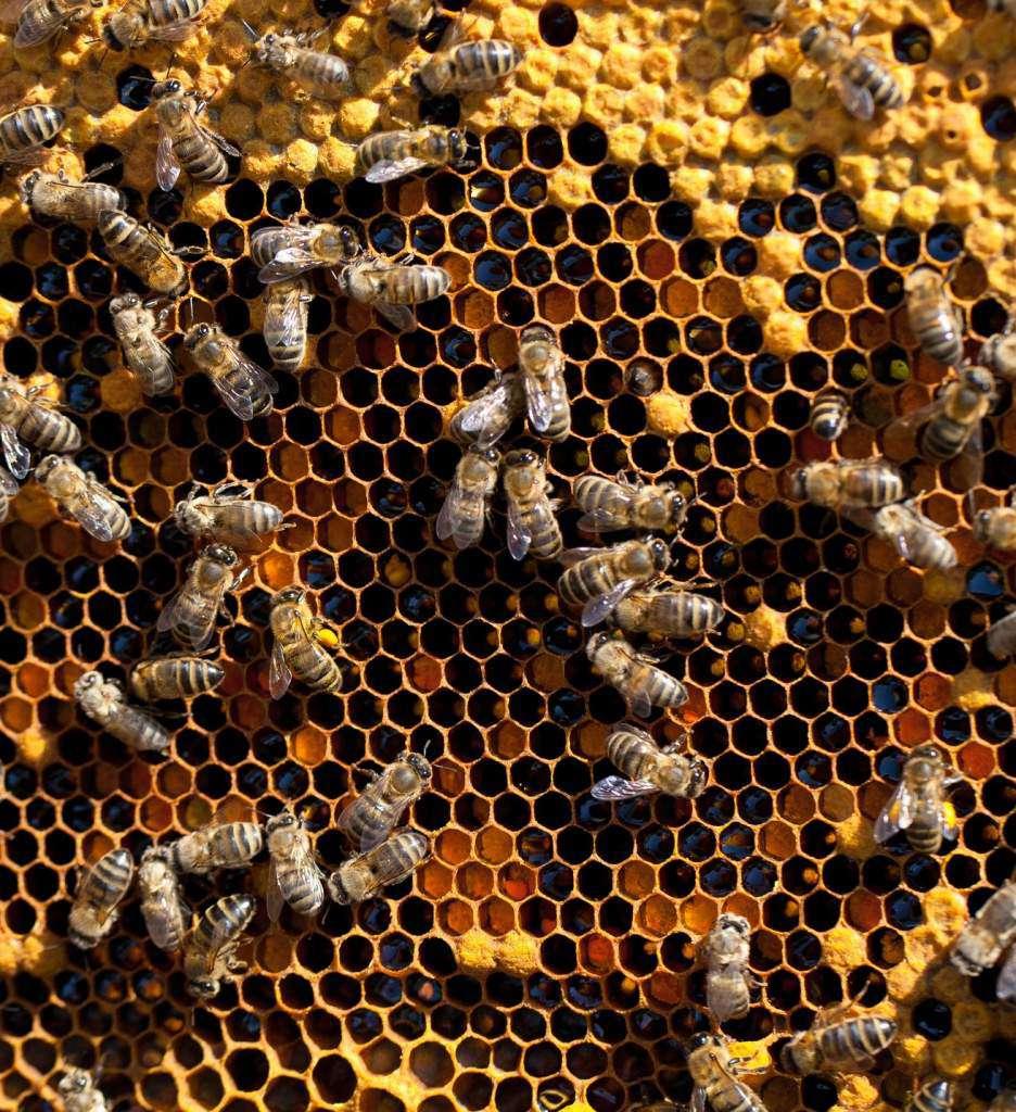 pszczoły-ul.jpg