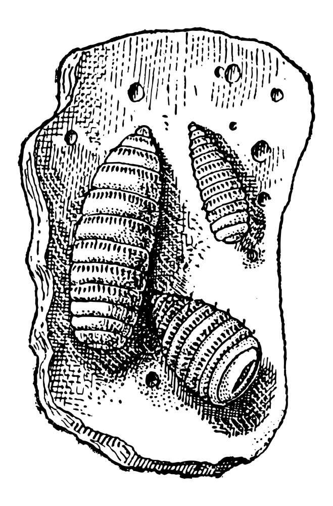 pasożyty-larwy.jpg
