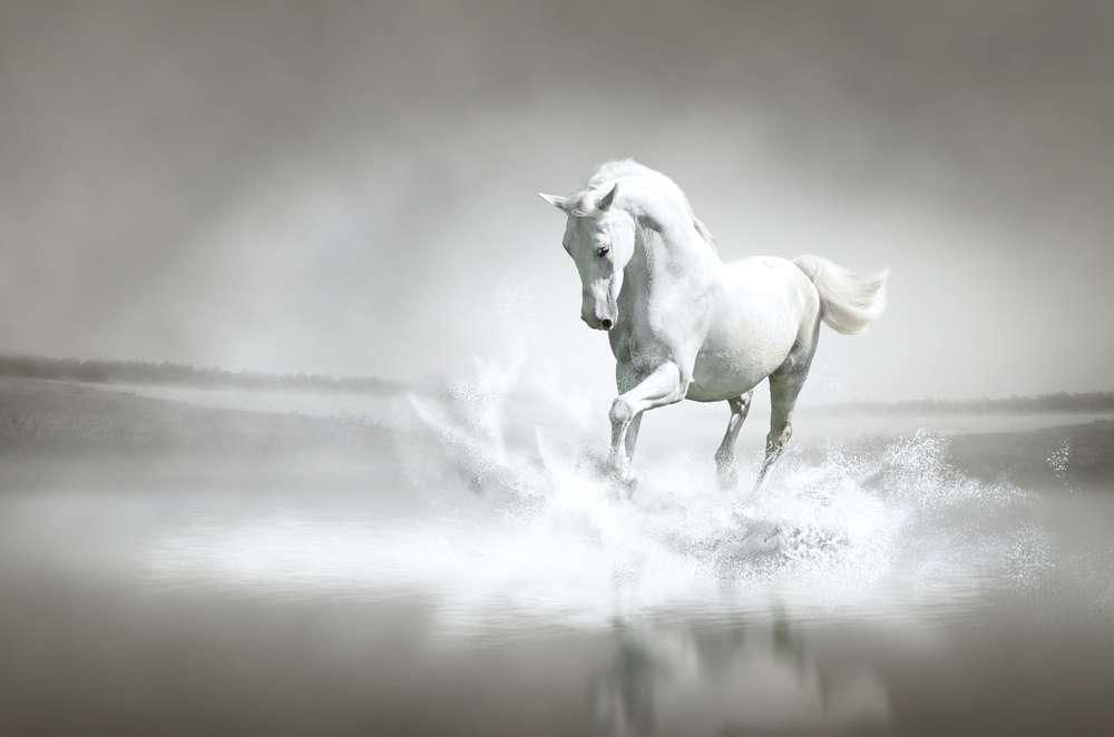 biały-rumak-sen.jpg