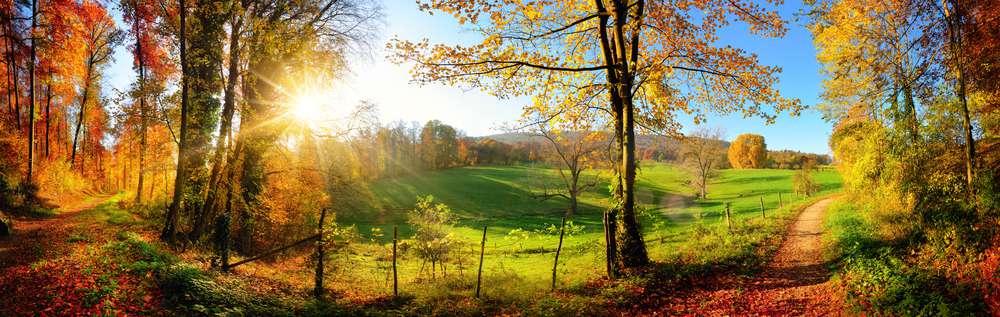 natura-przyroda-łąka.jpg