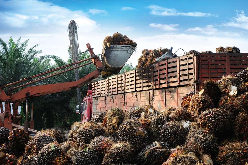 olej-palmowy-plantacja.jpg