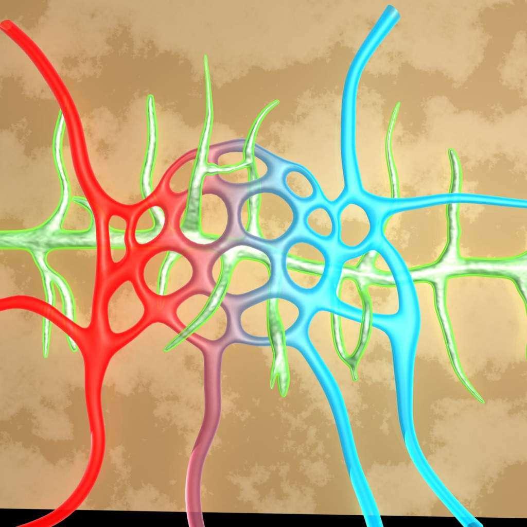 układ-limfatyczny-dr-robert-morse.jpg