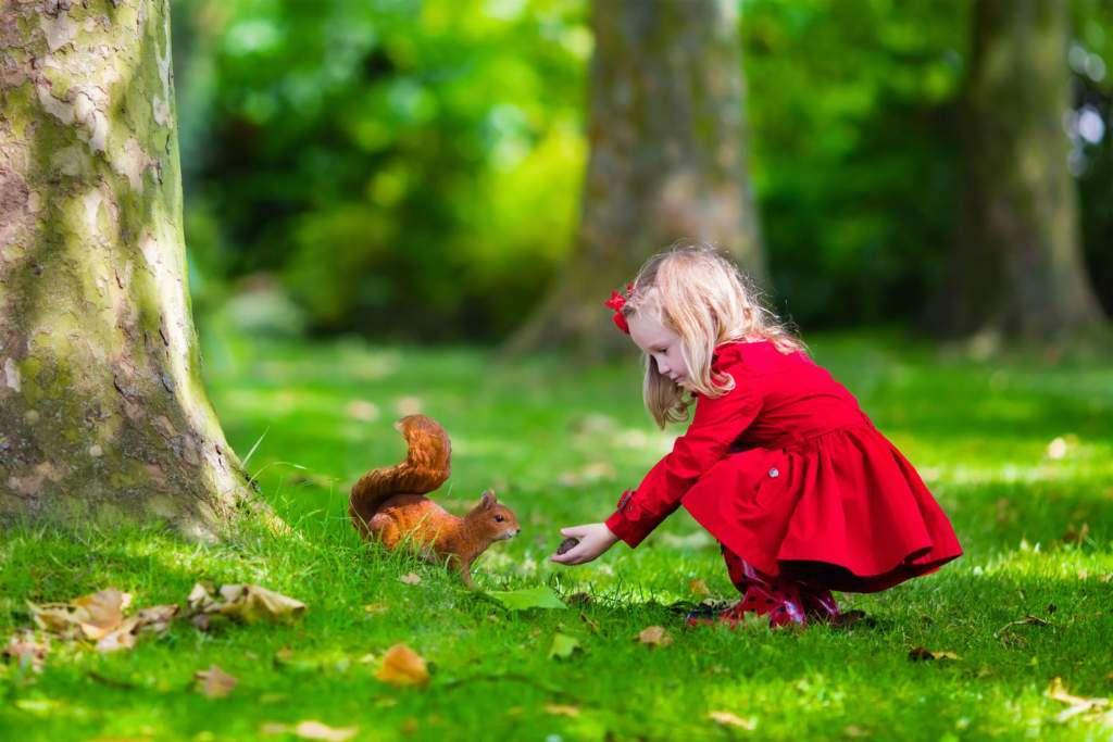 las-dziewczynka-wiewiórka.jpg