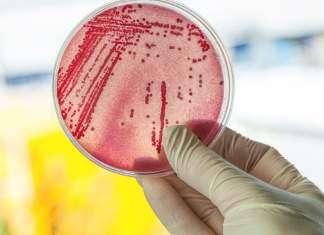 antybiotyki.jpg