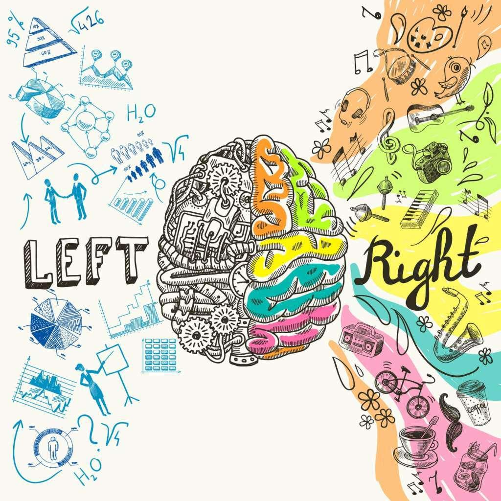 półkule-mózgowe.jpg