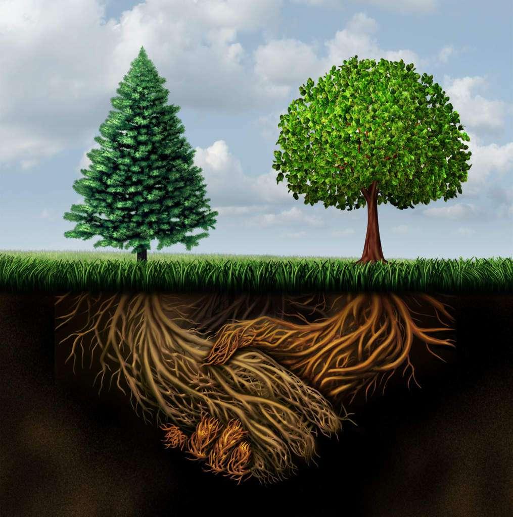 energetyka-symbolika-drzew.jpg
