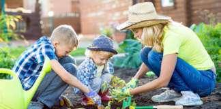 ogród-warzywny.jpg