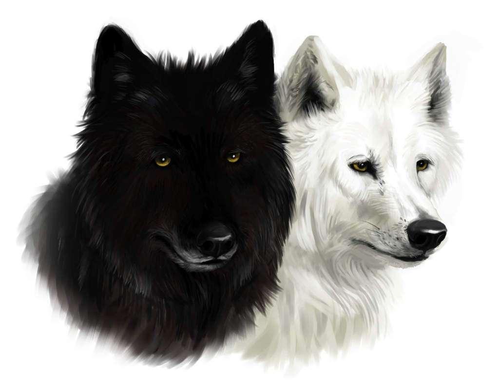 dwa-wilki-czarny-biały-przypowieść.jpg
