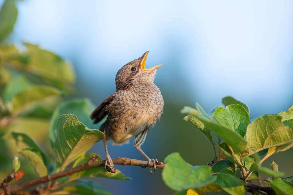śpiew-ptaka.jpg