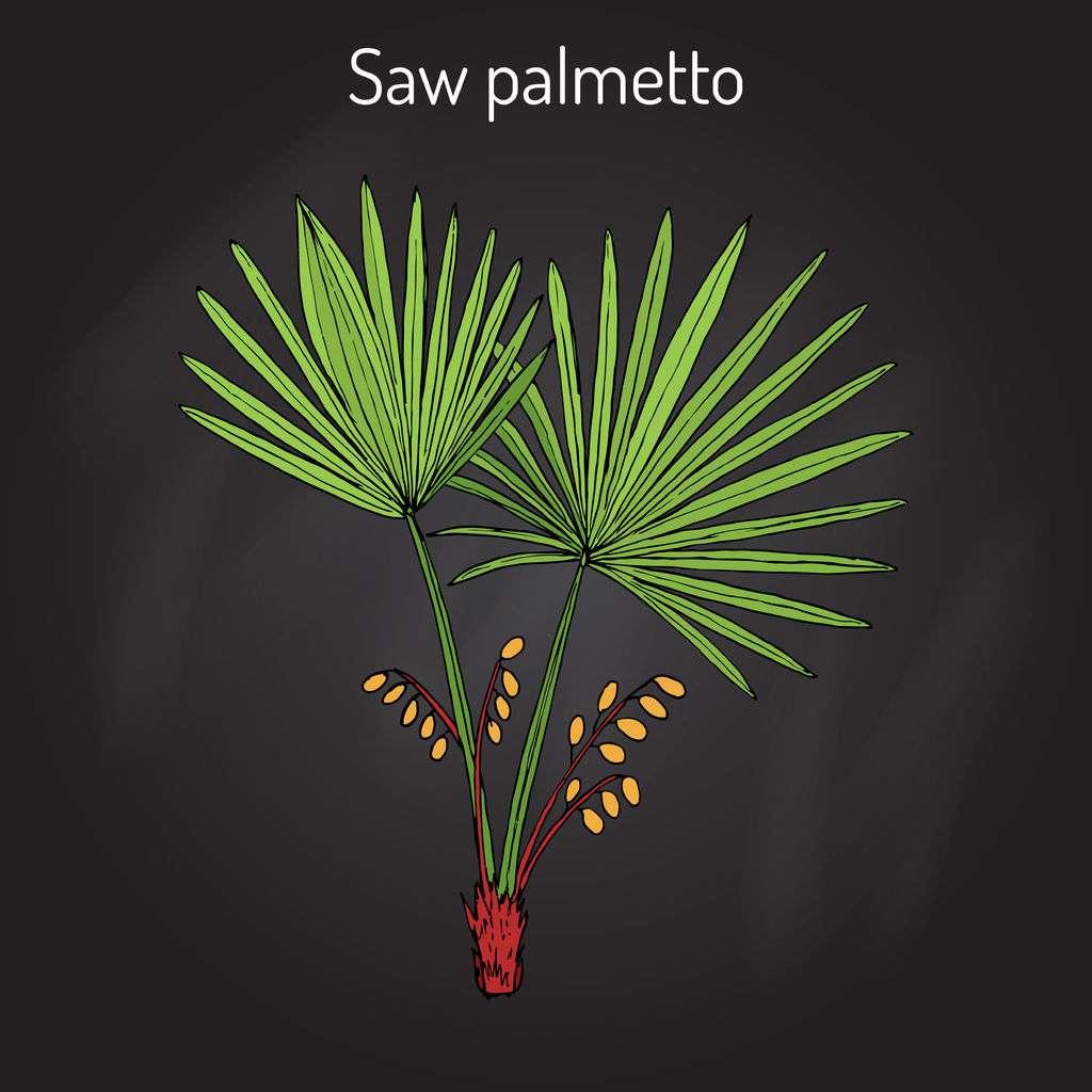 palma-sabałowa.jpg