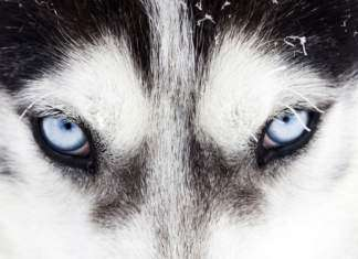 odwaga-oczy-wilk.jpg