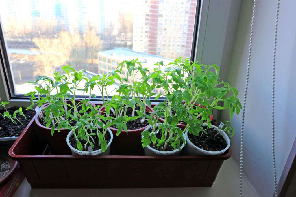 jak-wyhodować-warzywa-i-zioła-na-parapecie.jpg