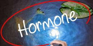 gospodarka-hormonalna.jpg