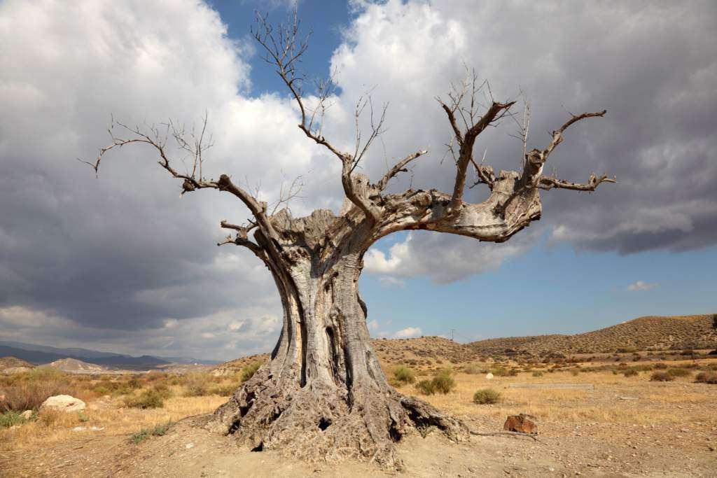 drzewo-susza.jpg