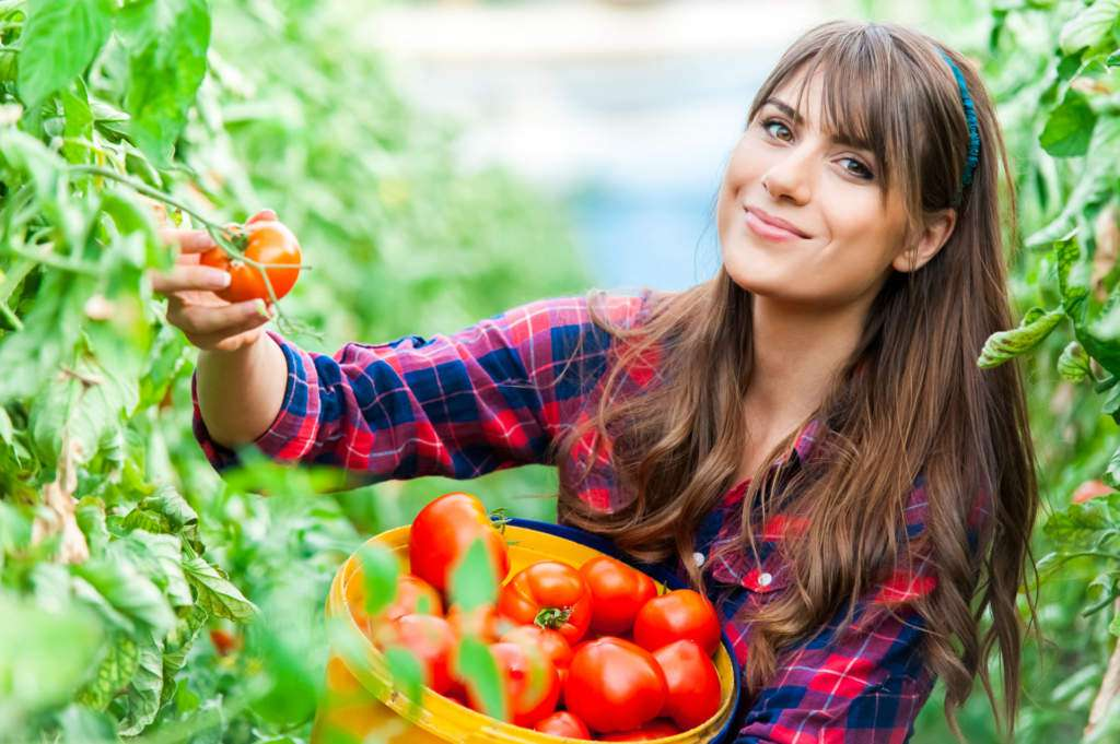 pomidory.jpg