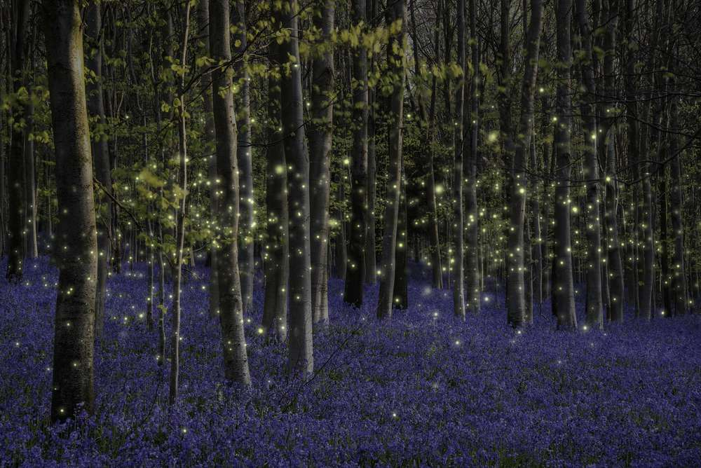 bioluminescencja.jpg