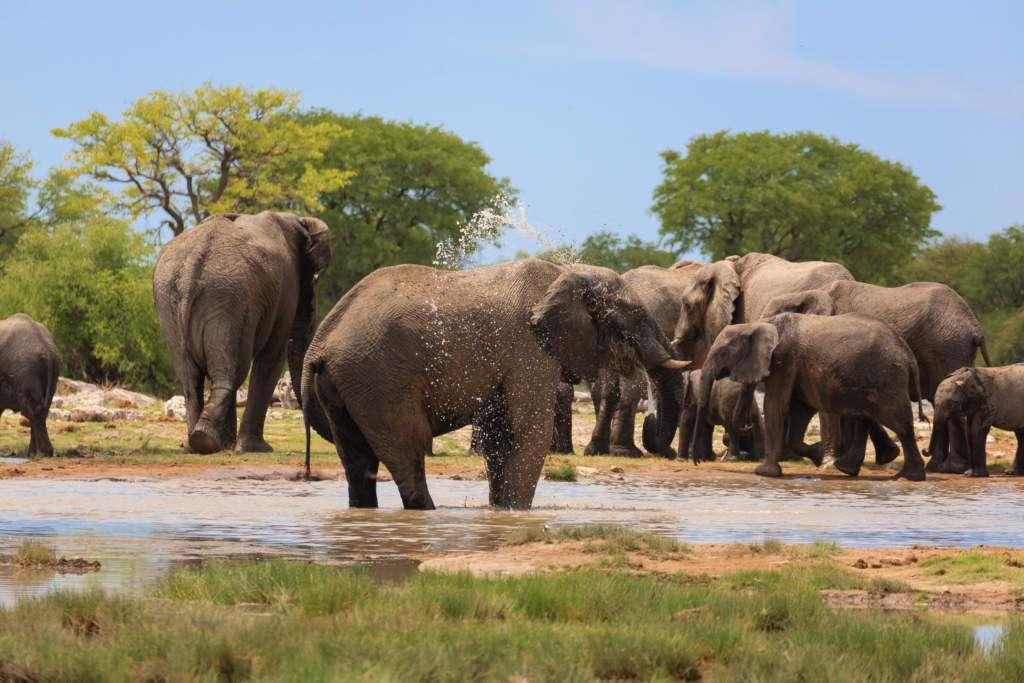 zdrowe-słonie.jpg