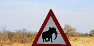 słonie-rak.jpg