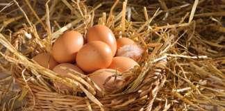 jajka-jajeczne-terapie.jpg