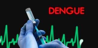 denga-szepionka.jpg