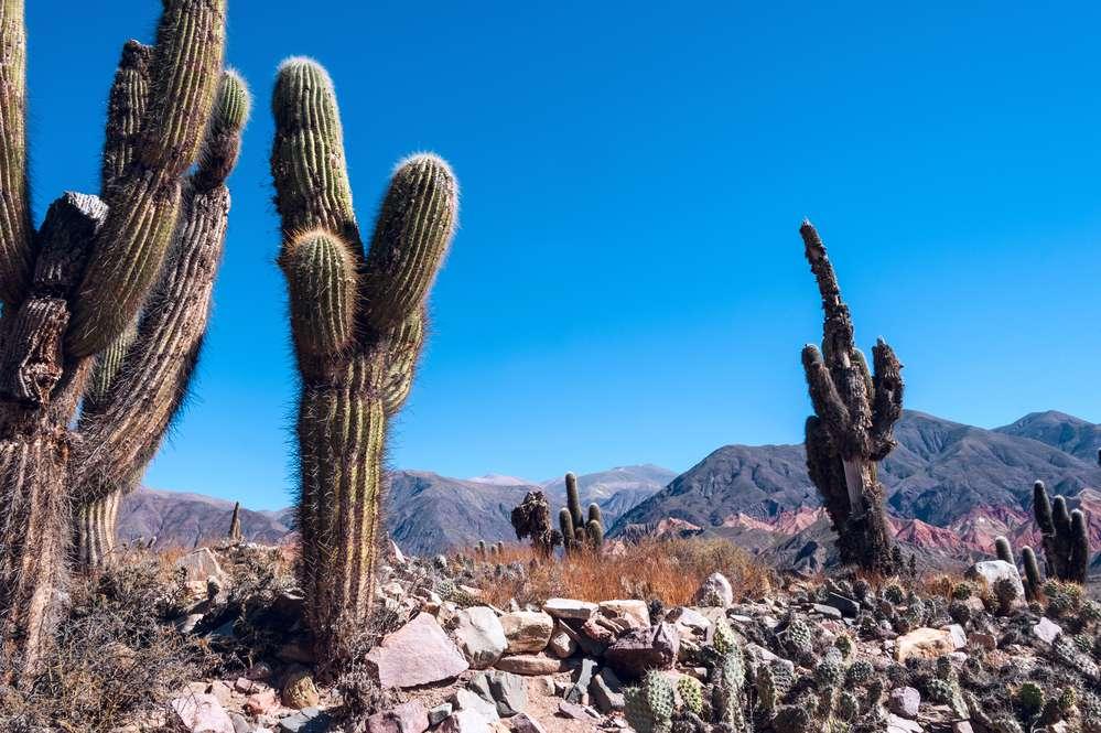 kaktusy.jpg
