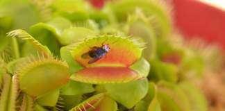 rośliny-owadożerne.jpg