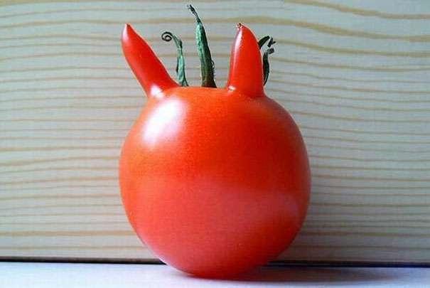 diabelski-pomidor.jpg