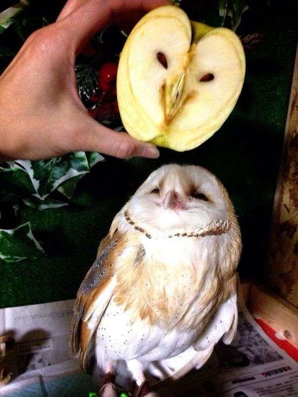 jabłko-sowa.jpg