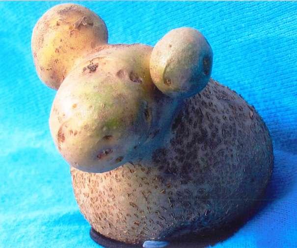 baran-ziemniak.jpg
