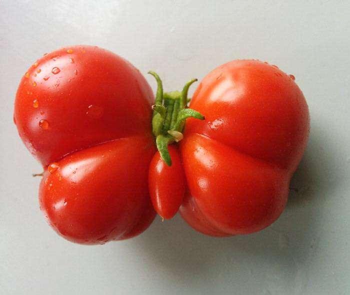 pomidor-motyl.jpg