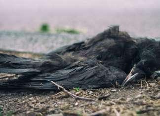 martwy-ptak.jpg