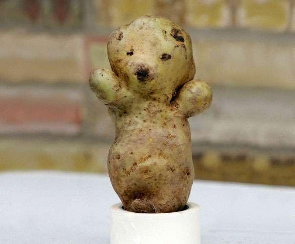 ziemniak-niedźwiadek.jpg