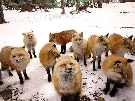 lisy-zao-fox-village.jpg