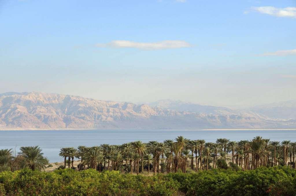 palma-judei-izrael.jpg