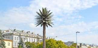 palma-judei-warszawa.jpg