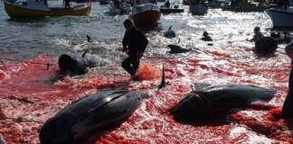 połów-wielorybów.jpg