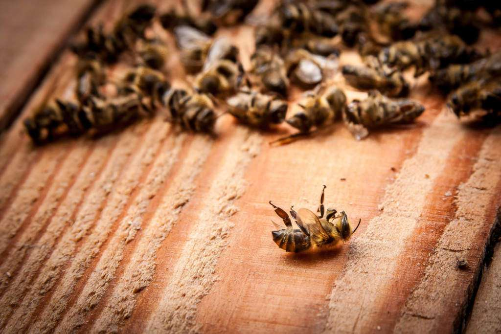 martwe-pszczoły.jpg