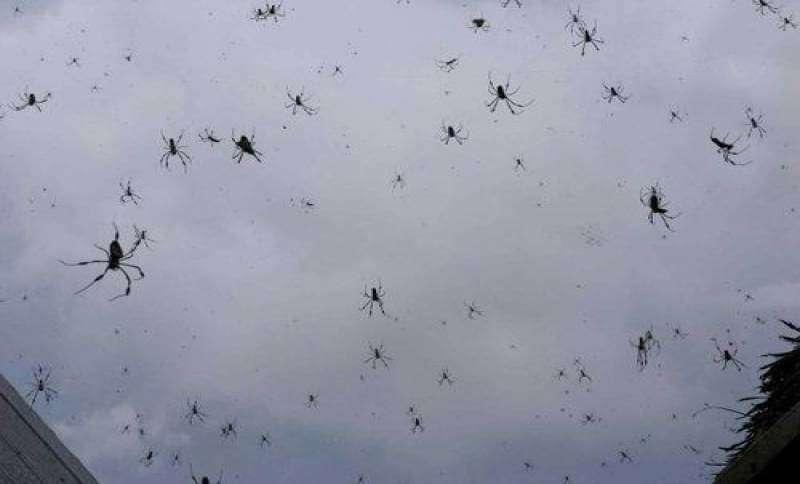 deszcz-pająków.jpg