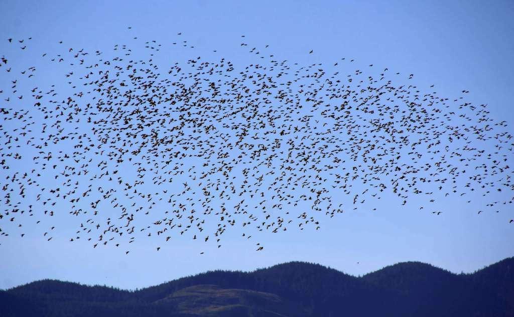 migracje-ptaków.jpg